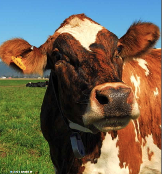 The cow is symbolic of Mother Earth in many cultures,  and represents characteristics of fertility, nourishment, possibilities and power. SlowMoney seeks to gain back the respect for the earth,  its soil and what these ecosystems enable.